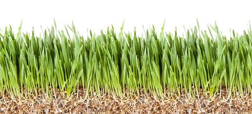 Vermiculite lose zur Anzucht